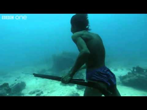 Underwater Fishing Without Scuba Gear [Video]