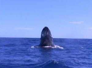 whalewack1
