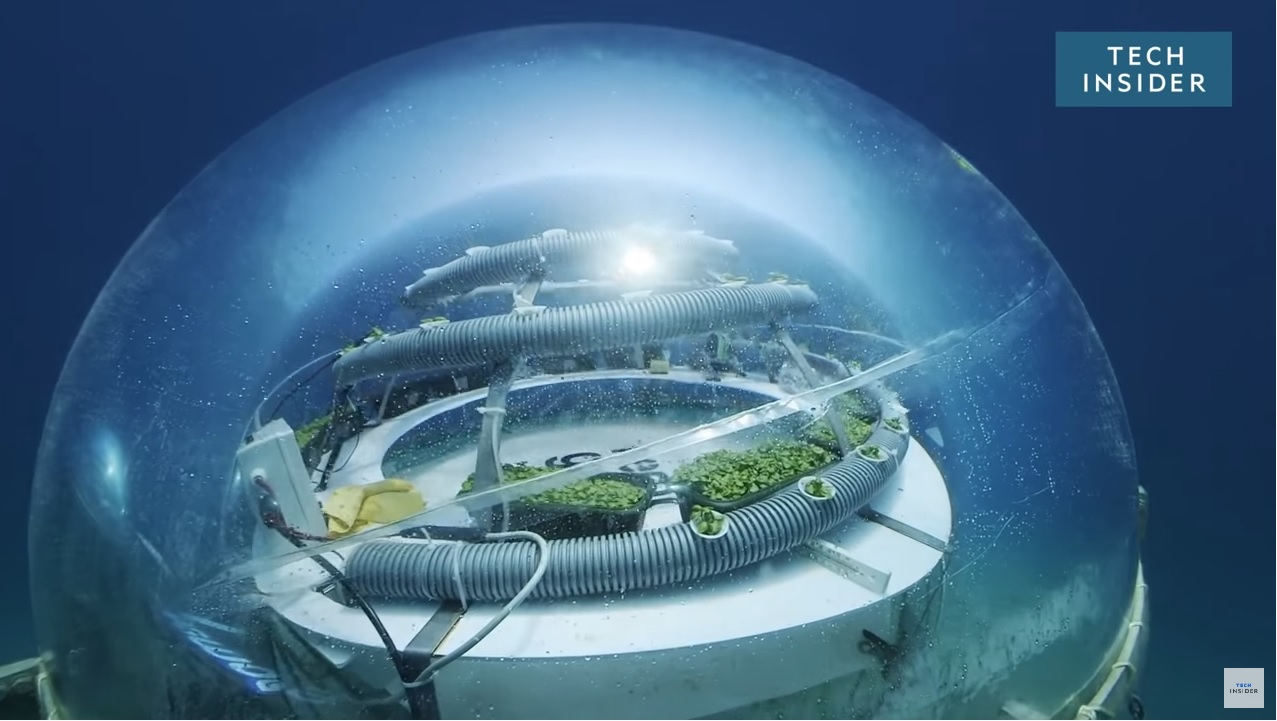Nemo's Underwater Garden