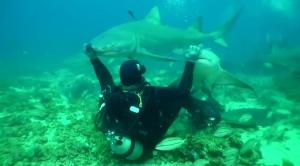 Shark Petting