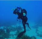 Scary Marine Wildlife Encounters Video For Scuba Divers