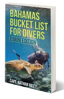 Bahamas Bucket List For Divers: Bimini Edition