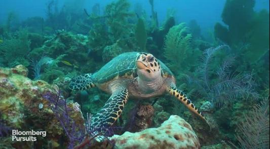 Scuba Diving Dream - Cuba