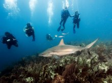 Scuba Diving Dream - Cuba