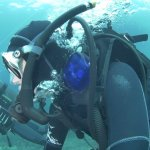 SHARKNET on diver gear