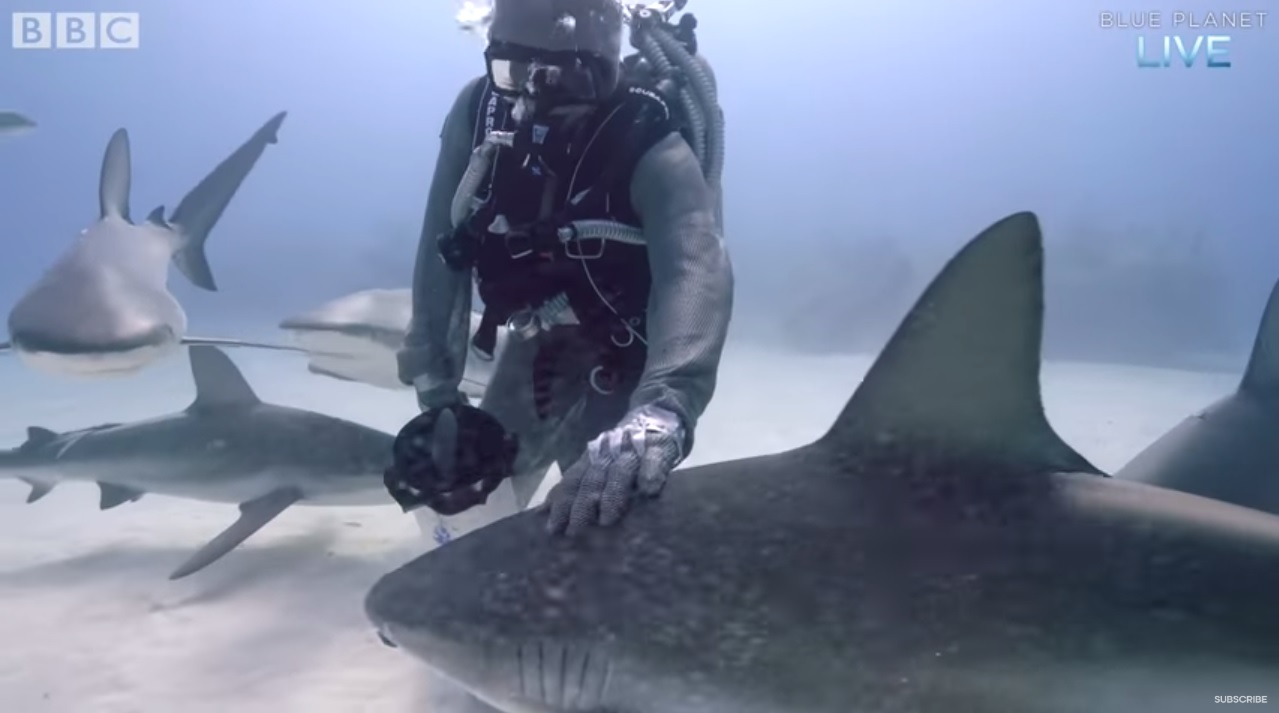 Shark Diving in Armored Auit