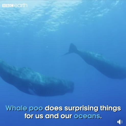 Whale Poo
