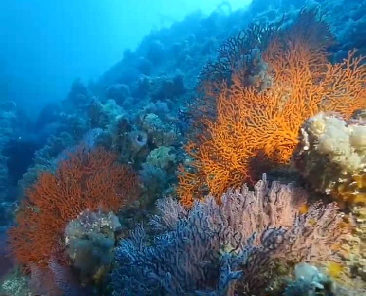 Diving Australia's Great Southern Reef
