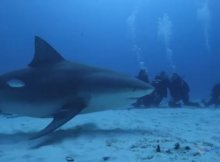 Scuba Diving With Deadly Animals