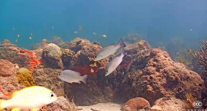 Live Underwater Camera