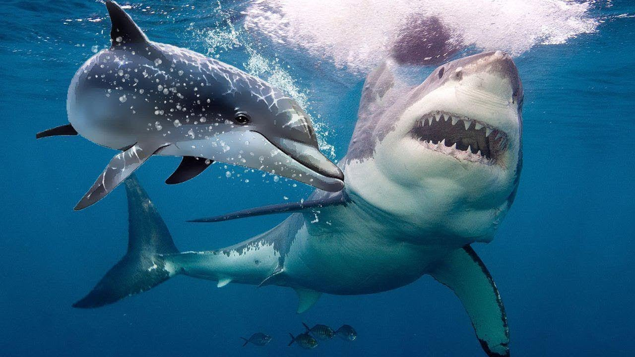 Sharks Terrified of Dolphins
