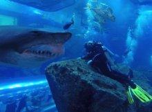 Scary Shark Encounter - Aquarium Diving