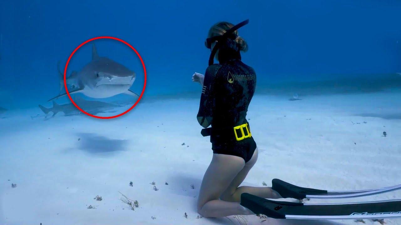 Scary Shark Encounters