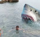 The Megalodon Exists