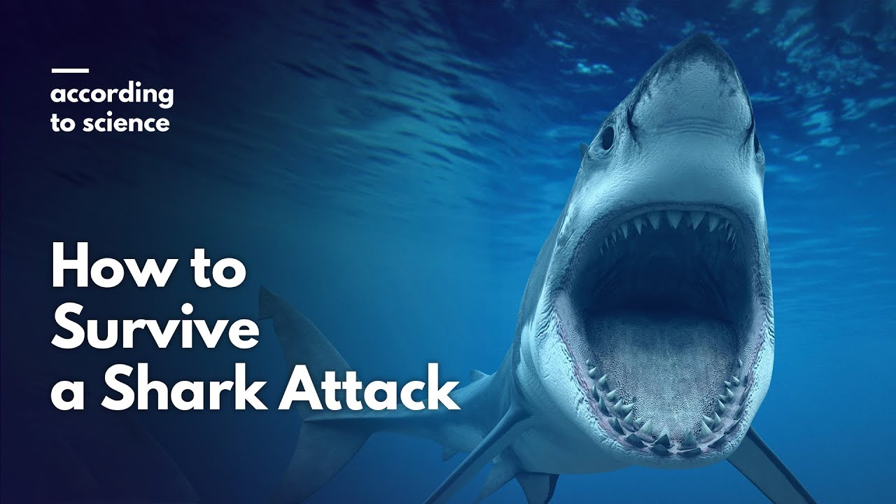 Shark Attack Survival Tips - For Scuba Divers