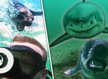 Seals Save Divers From Sharks