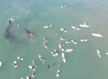 Free-diver Agitates Whale