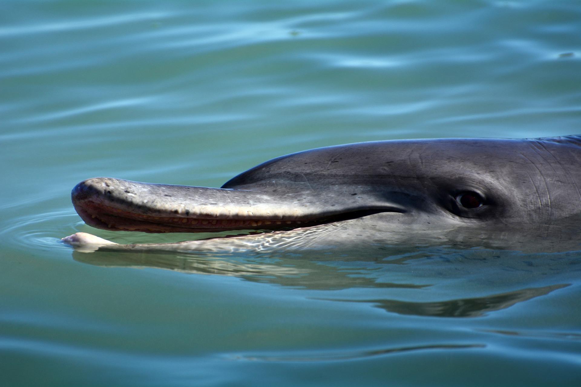 Dolphin's Dark Side