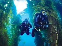 Kelp Diving Tips and Where To Go