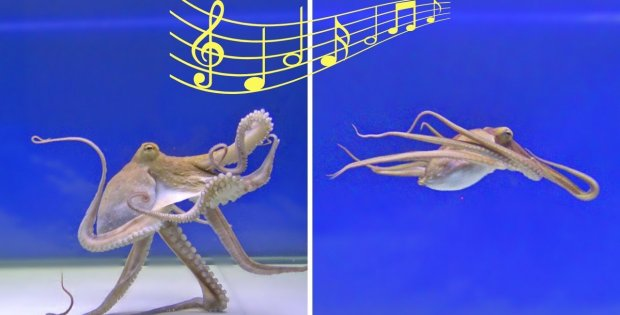 Octopuses And Music