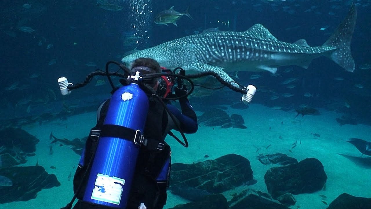 Aquarium Diving In The US