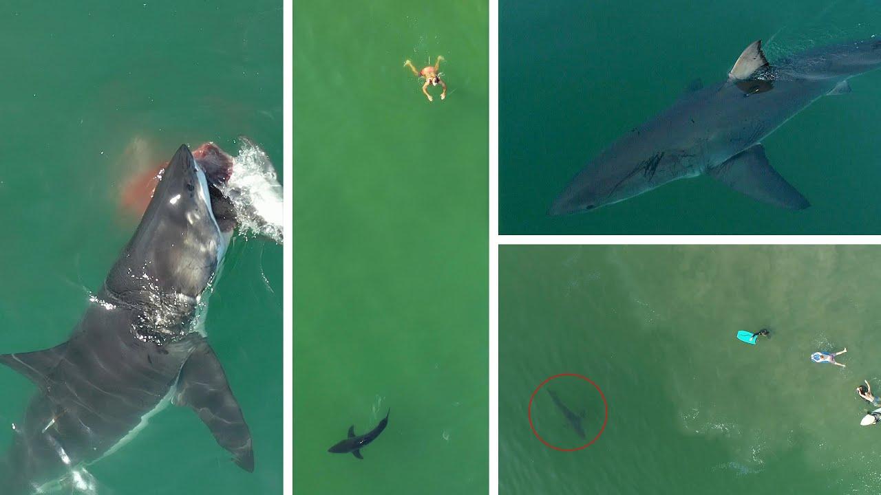 Best Shark Drone Videos 2020