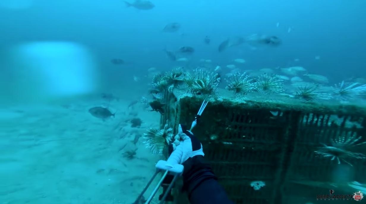 Lionfish Chicken Coops