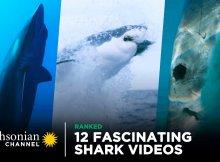 Fascinating Shark Videos - Compilation
