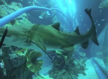 Aggressive Shark Behavior Lessons