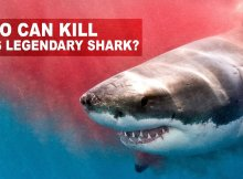 Great White Sharks Should Fear These