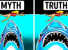 Megalodon Myths & Truths