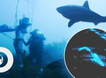 Diver Avoids Underwater Shark Attack With Sonar Technology