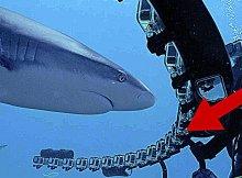 Shark Week 2021: Do Sharks Like GoPros?