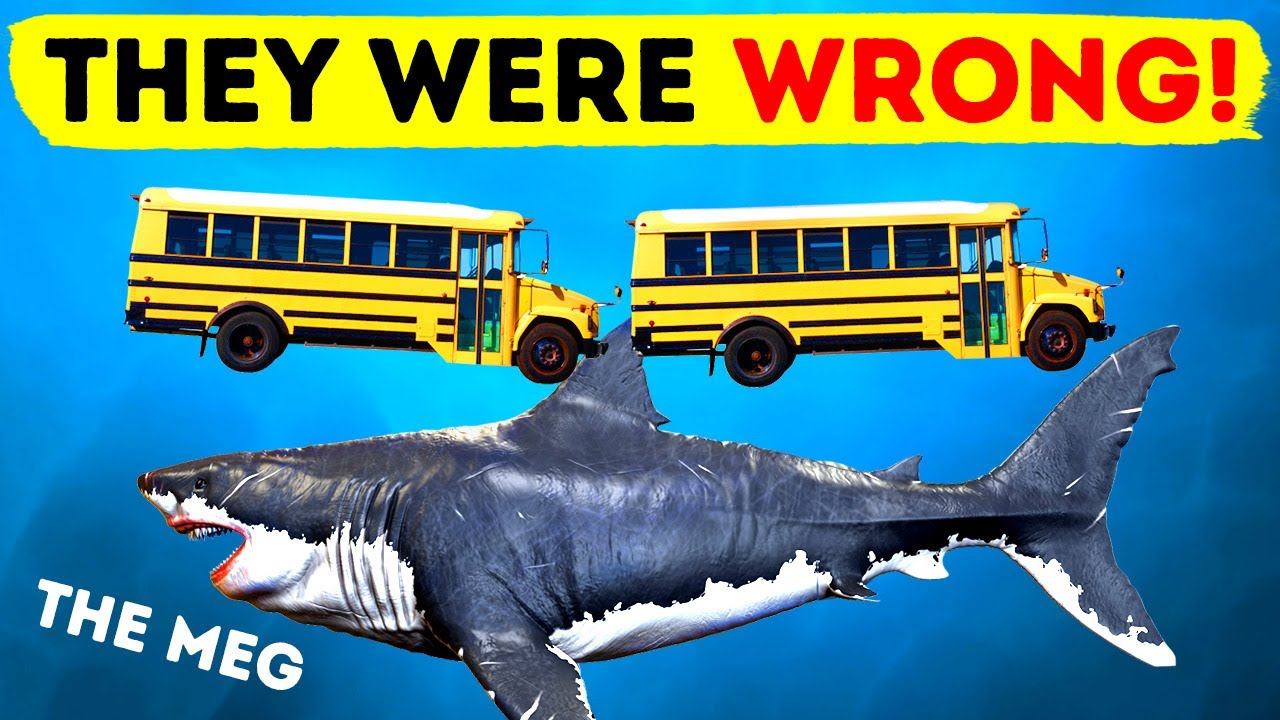 The Megalodon - Recent Discoveries