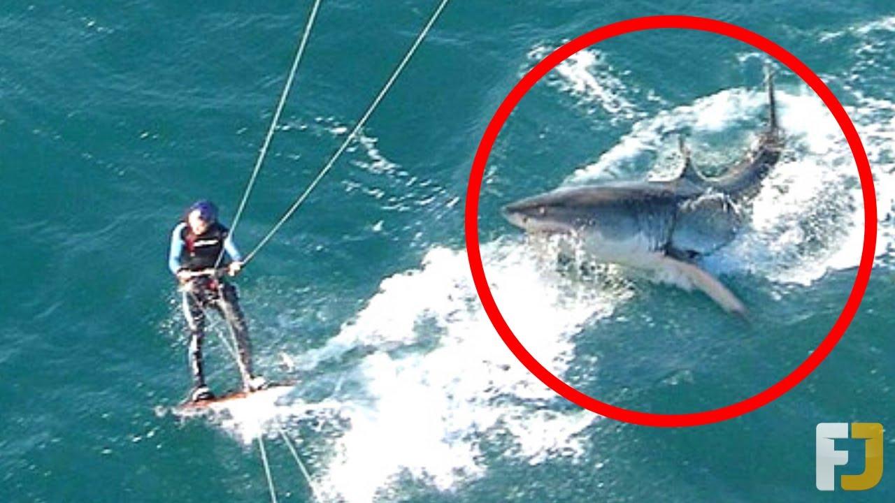 15 Scary Shark Encounters