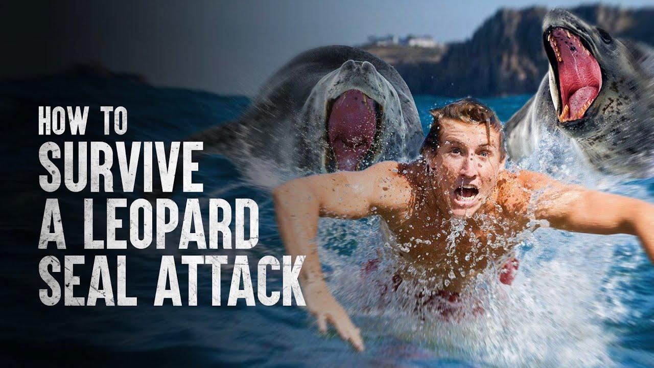 Surviving a Leopard Seal Attack